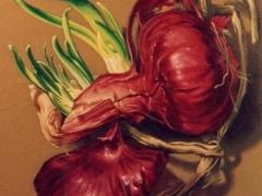 La cipolla rossa germogliata