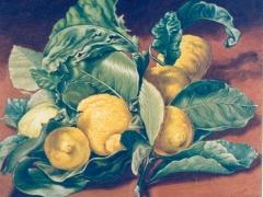 Limoni di villa