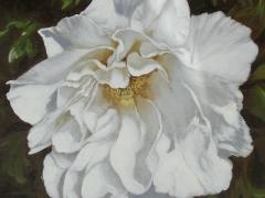 Studio di fiori bianchi: la peonia Guido Zibordi Marchesi